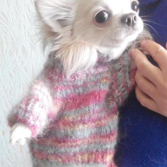 Свитер для маленькой собачки, свитер для миника