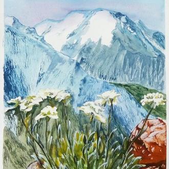Акварель - Эдельвейсы в горах