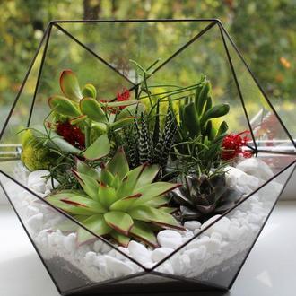 Флорариум геометрический с суккулентми, икосаэдр 260Х220