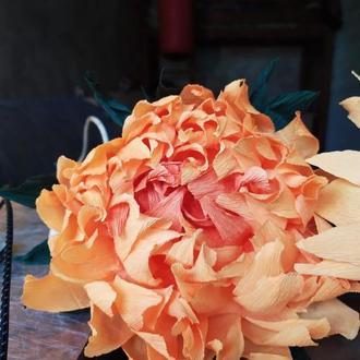 Подсолнух цветок на короткой ножке