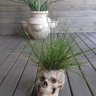Горшік під кімнатні квіти у формі черепа