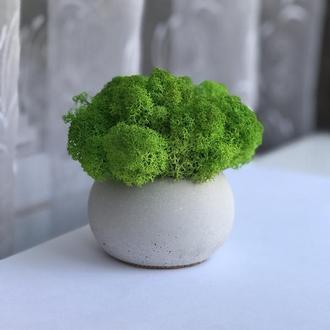 Бетонний горщик з стабілізованим мохом 9*9 см К1 шар / кашпо из бетона для цветов