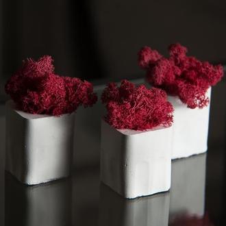 Набор. Красный скандинавский мох в белом кашпо (набор из 3 шт.)