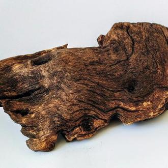 Топляк Кусок Затопленного Дерева