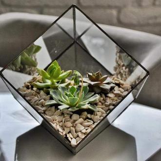 Флорариум куб большой