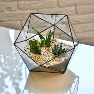 флорариум треугольник