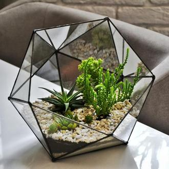 флорариум треугольник большой