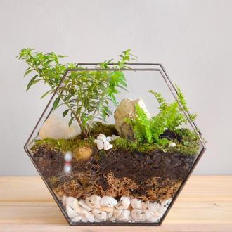 Флорариум тропический с живым мхом