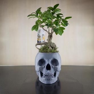 Оригинальное дерево бонсай