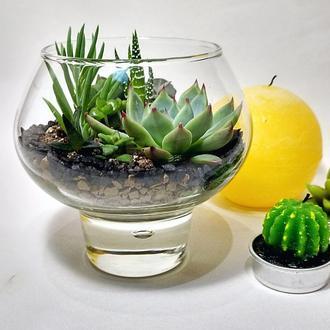 Мини-флорариум в стекле