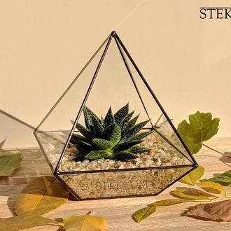 Флорариум №2 mini + растение + набор для посадки композиций из суккулентов, кактусов