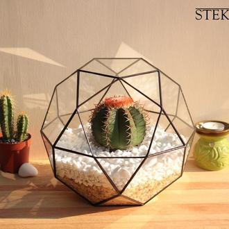 Флорариум №6 maxi + 3 растения + набор для посадки композиций из суккулентов, кактусов