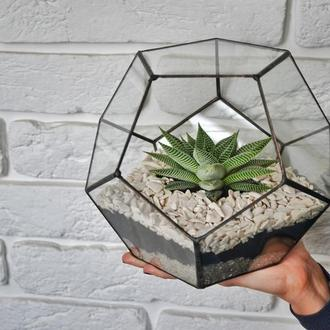 Флорариум пятиугольник