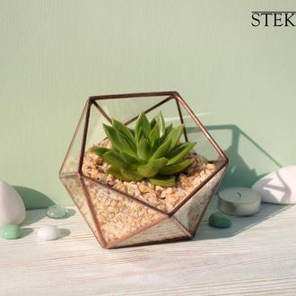 Флорариум №7 micro + растение + набор для посадки композиций из суккулентов, кактусов