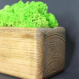 Кашпо із стабілізованим мохом