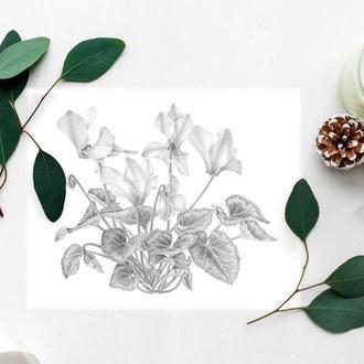 Открытка Цикламен ботаническая иллюстрация, 10х15 см.  Черно-белая открытка, графика