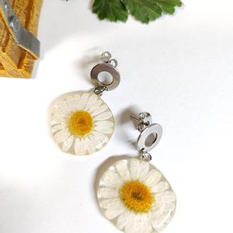 Серьги-гвоздики с натуральными цветами ромашки в ювелирной смоле.