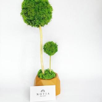 Дерево з стабілізованого моху