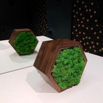 Двусторонняя шестиугольная рамка с натуральным мхом