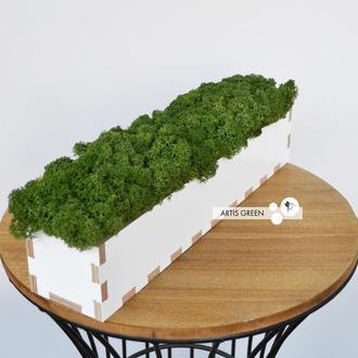 Кашпо со стабилизированным мхом, зелёное
