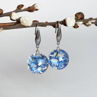Серьги с незабудками. Украшения из настоящих цветов. Синие незабудки. (модель № 2481) Glassy Flowers