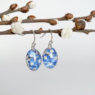 Серьги с незабудками. Украшения из настоящих цветов. Синие незабудки. (модель № 2483) Glassy Flowers