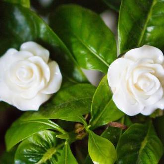 """Клипсы """"Белые розы"""""""