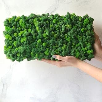 Фітопанель из стабилизированного мха стена картина вертикальное озеленение
