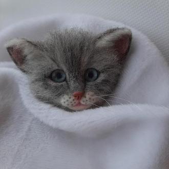 Брошь валяная из шерсти серый котенок