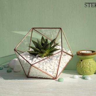 Флорариум №7 optima + растение + набор для посадки композиций из суккулентов, кактусов