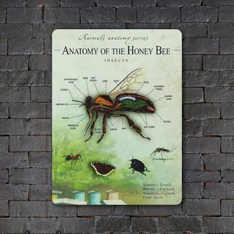 Постер (картина) табличка — ANATOMY OF THE HONEY BEE