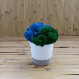 Стабілізований мох ягель у бетонному кашпо. Гарний подарунок. Окраса дому та офісу. Стиль лофт