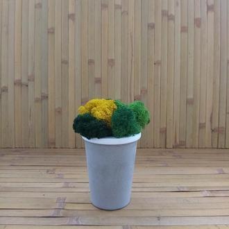 Стабілізований мох ягель у бетонному кашпо Гарний подарунок. Окраса дому, офісу, магазину Лофт стиль