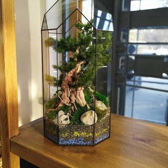 Бонсай из стабилизированных растений в геометрической форме
