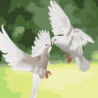 Картина по номерам 40x40 Белоснежные голуби, Идейка (КНО4149) (0079-2048)