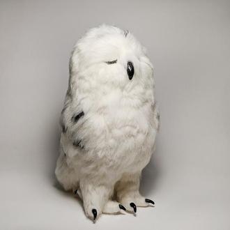 Спящая полярная сова