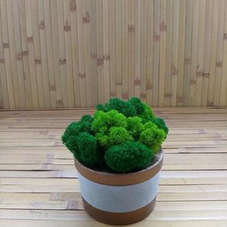 Скандінавський мох у бетонному кашпо. Стильний подарунок. Лофт стиль