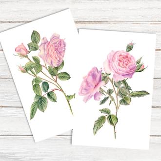 Розы набор из 2х открыток, цветы, ботаническая иллюстрация, акварель. Художник Марина Вознюк