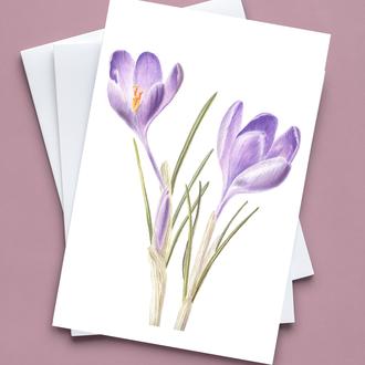 Открытка Крокус, ботаническая акварель, весенние цветы. Художник Марина Вознюк. Сиреневый