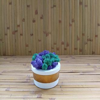 Скандинавський мох у бетонному кашпо. Стильний подарунок. Декор для офісу, ресторану, готелю