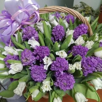 Корзина гиацинтов с тюльпанами