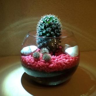Флорариум. Композиция из кактуса.