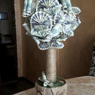 Топиарий долларовое денежное дерево