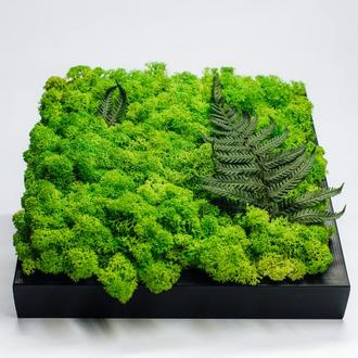 Картина з стабілізованого моху і папороті