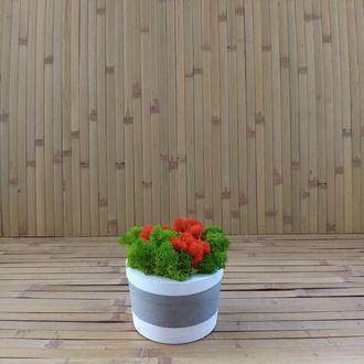 Кашпо з бетону для кактусів, сукулентів, моху. Лофт стиль. Еко декор