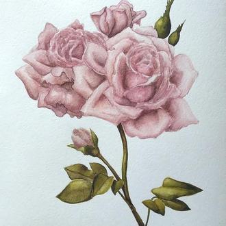 Нежная роза, акварель