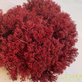 Стабилизированный мох ягель украинский красный