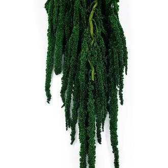 Амарант зеленый темный