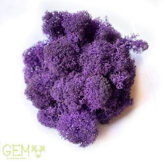 Норвезький мох ягель фіолетовий