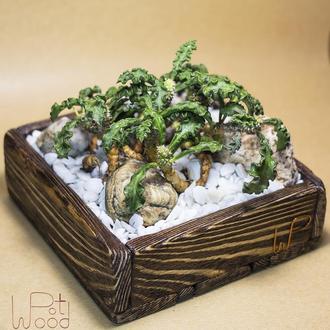 """Деревянный горшок """"Wenge"""" + группа растений (Euphorbia decaryi var. spirosticha)"""
